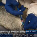 COVID-19: Il primo vaccino al mondo per animali è stato registrato in Russia.